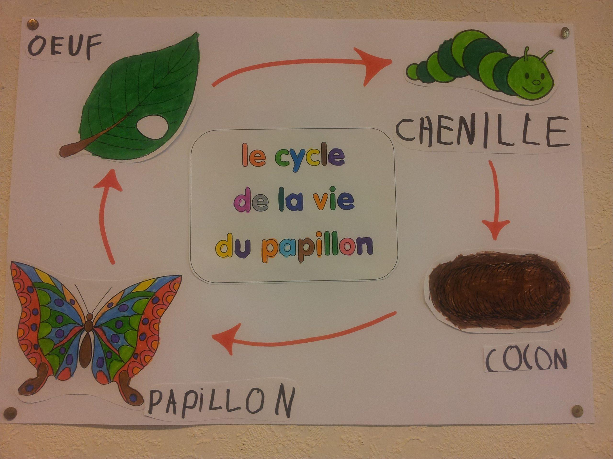 Le Cycle De La Vie Du Papillon | La Chenille Qui Fait Des encequiconcerne Cycle De Vie D Une Chenille
