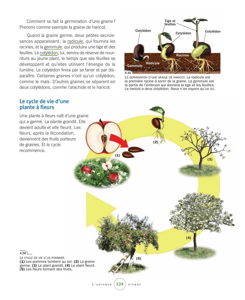 Le Cycle De Vie D`une Plante À Fleurs pour Schéma D Une Fleur