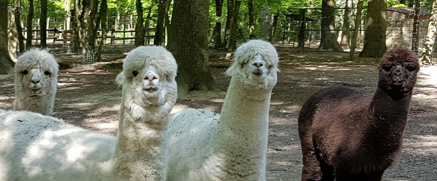 Le Parc Animalier De Janvry - Janvry intérieur Jeux De Ferme Gratuit Avec Des Animaux
