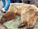 Le Secret D'hibernation De L'ours avec Les Animaux Qui Hivernent