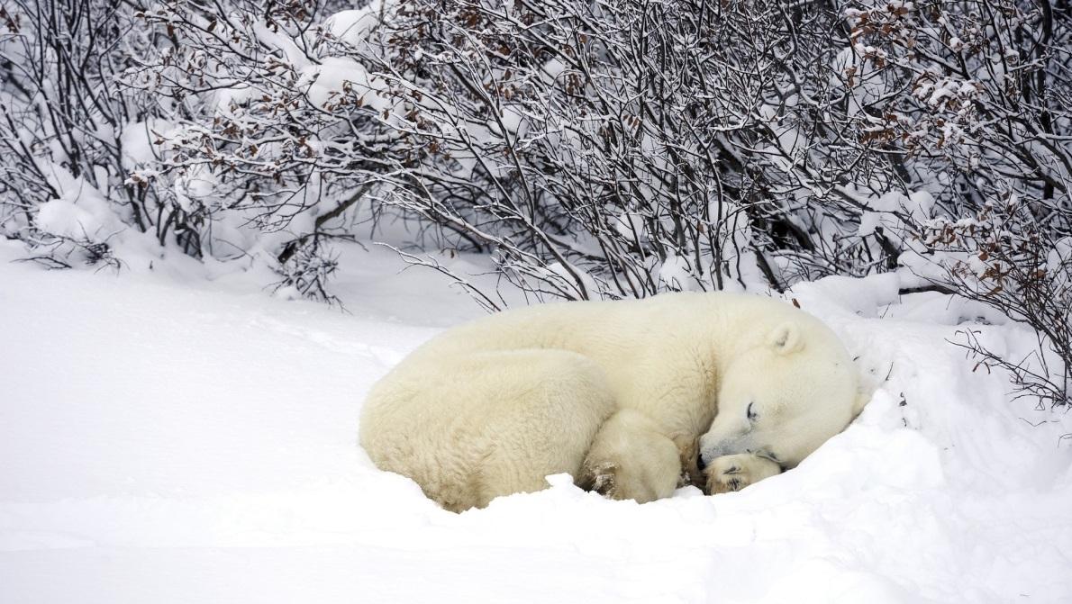 Le Sommeil Et Les Saisons : L'hiver - Blog Bruno à Les Animaux Qui Hivernent