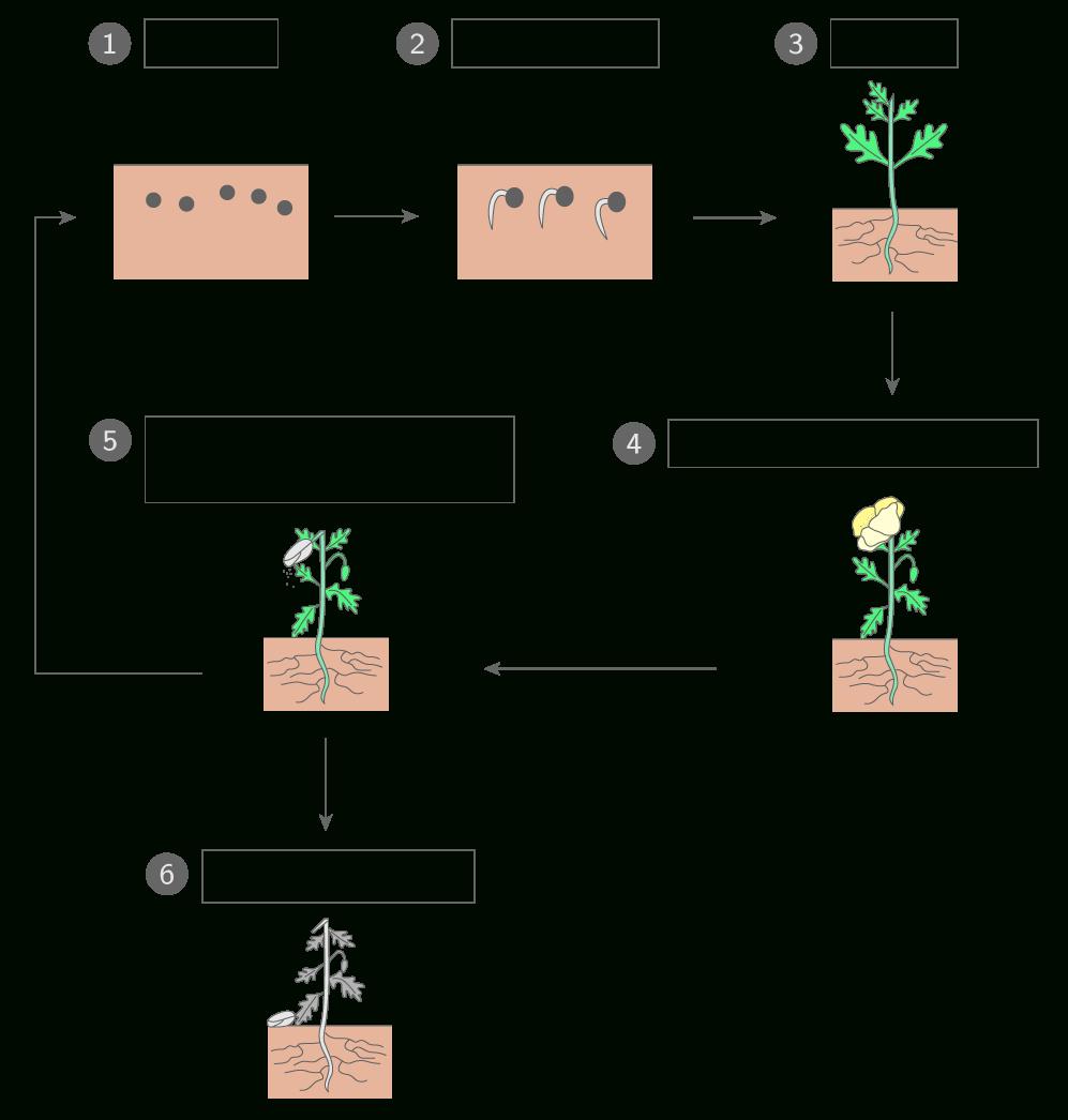 Légender Le Schéma Du Cycle De Développement D'une Plante à Schéma D Une Fleur