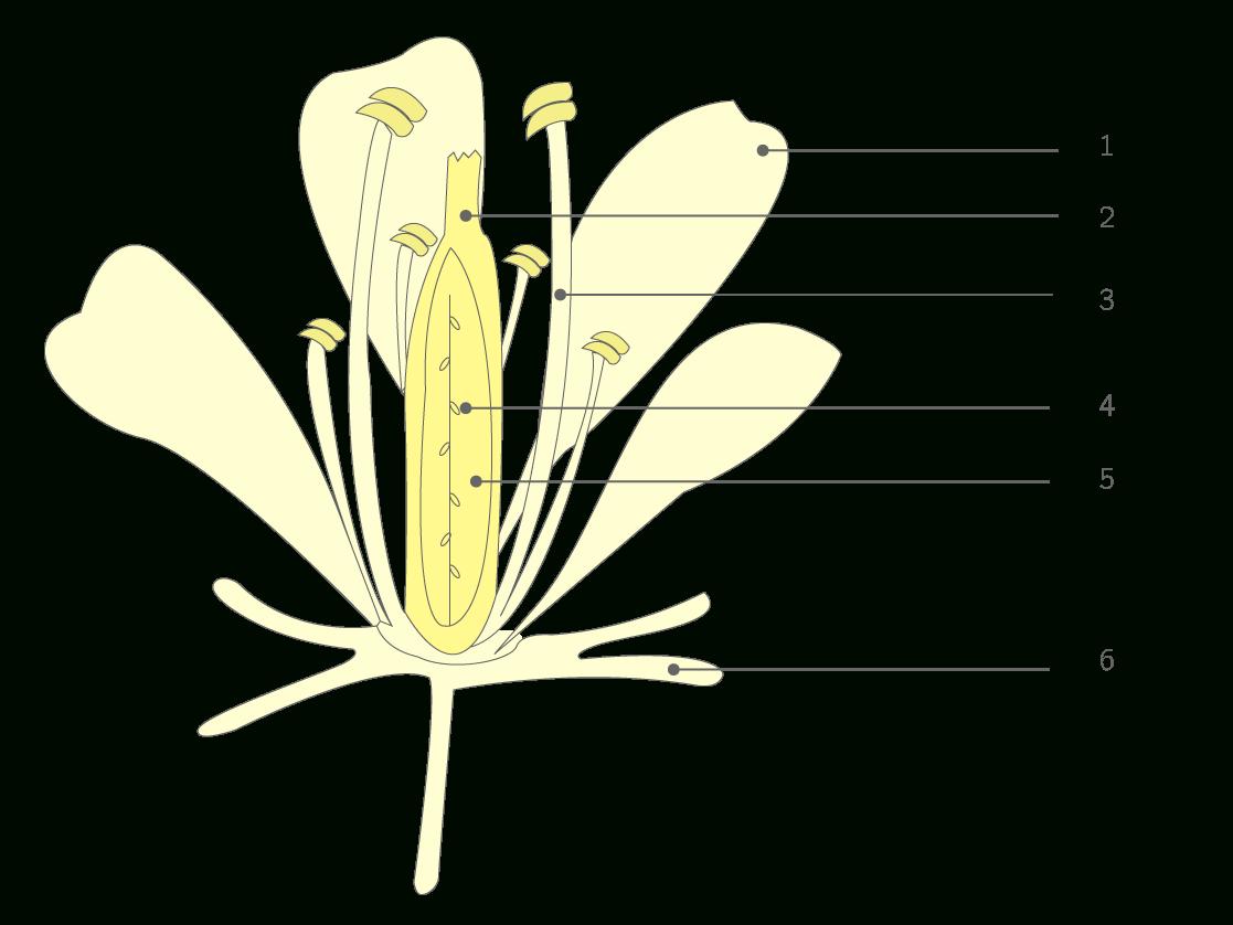 Légender Un Schéma D'une Fleur - 6E - Exercice De concernant Schéma D Une Fleur