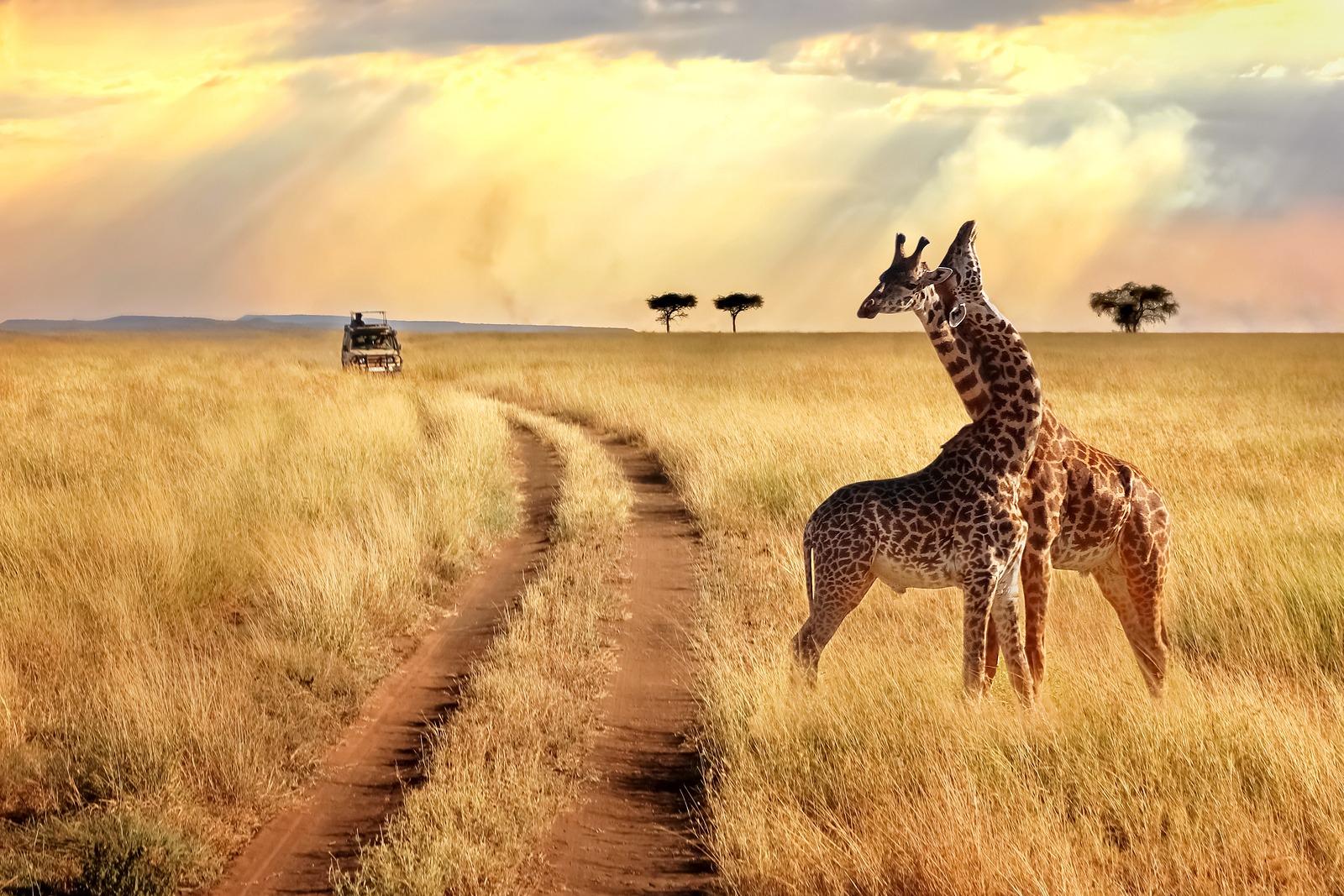 Les 5 Meilleurs Safaris En Afrique - Exoticca Blog à Les Animaux De L Afrique
