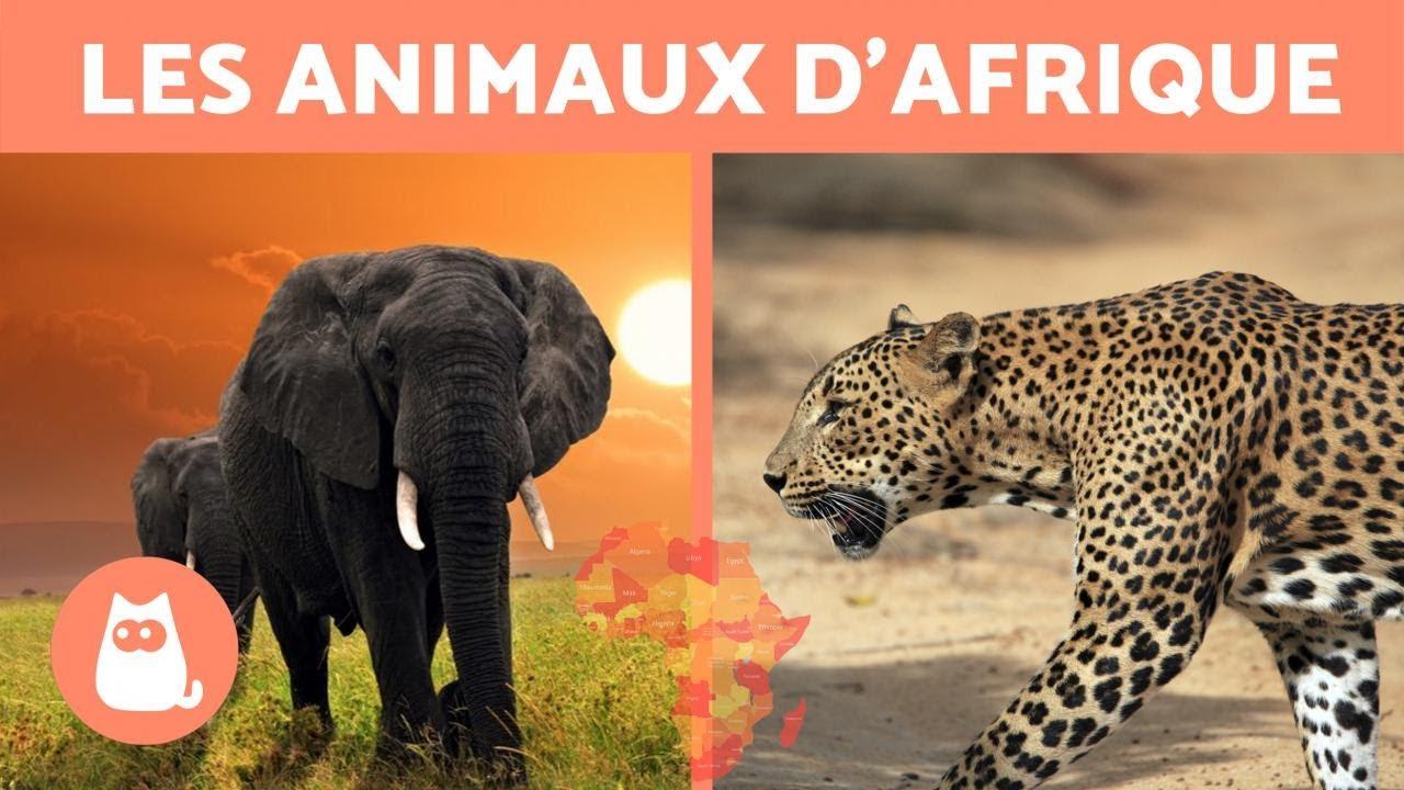 Les Animaux D'afrique - 10 Animaux Sauvages De La Savane Africaine avec Les Animaux De L Afrique