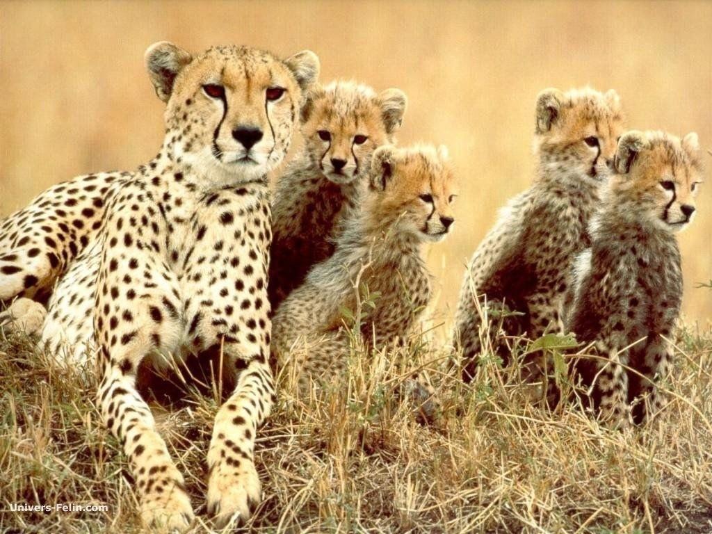 Les Animaux D'afrique Du Sud - Les Pays Du Monde destiné Les Animaux De L Afrique