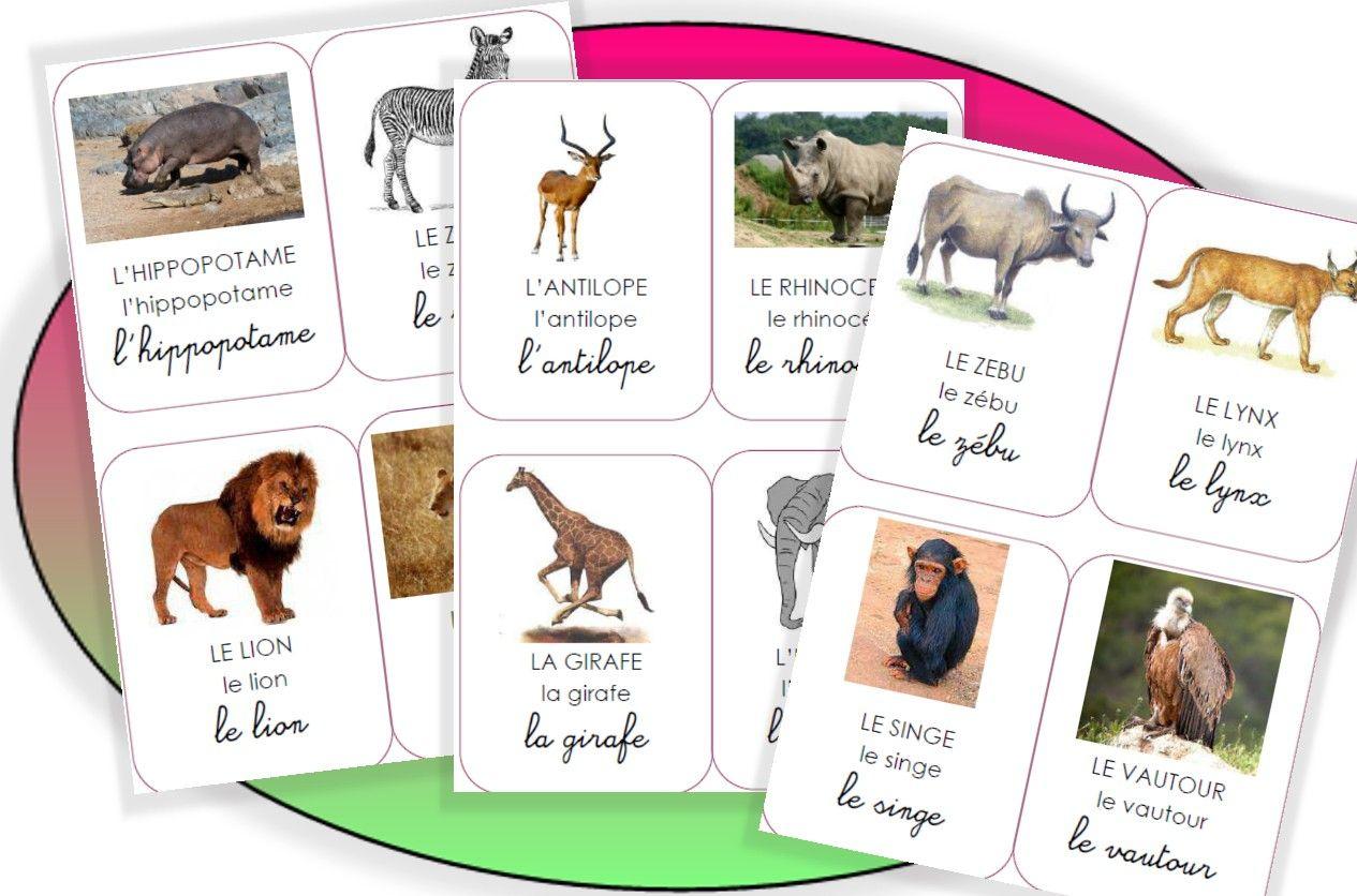 Les Animaux De L'afrique | Animaux Afrique, Imagier Animaux intérieur Les Animaux De L Afrique