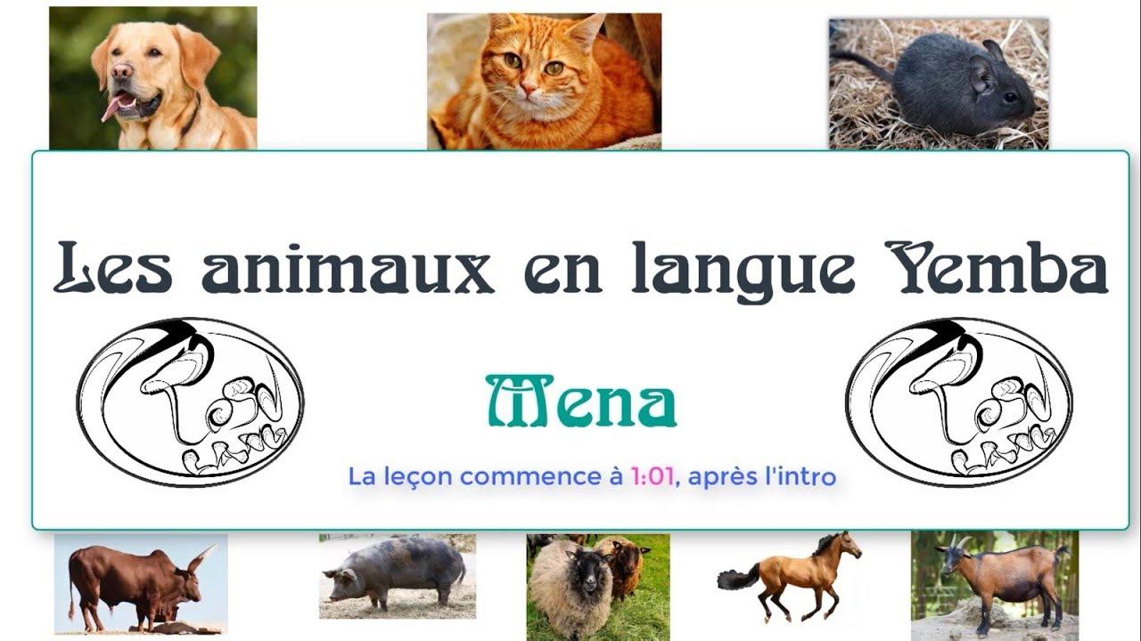 Les Animaux En Langue Yemba Part1: Animaux Domestiques dedans Les Animaux Domestiques En Maternelle