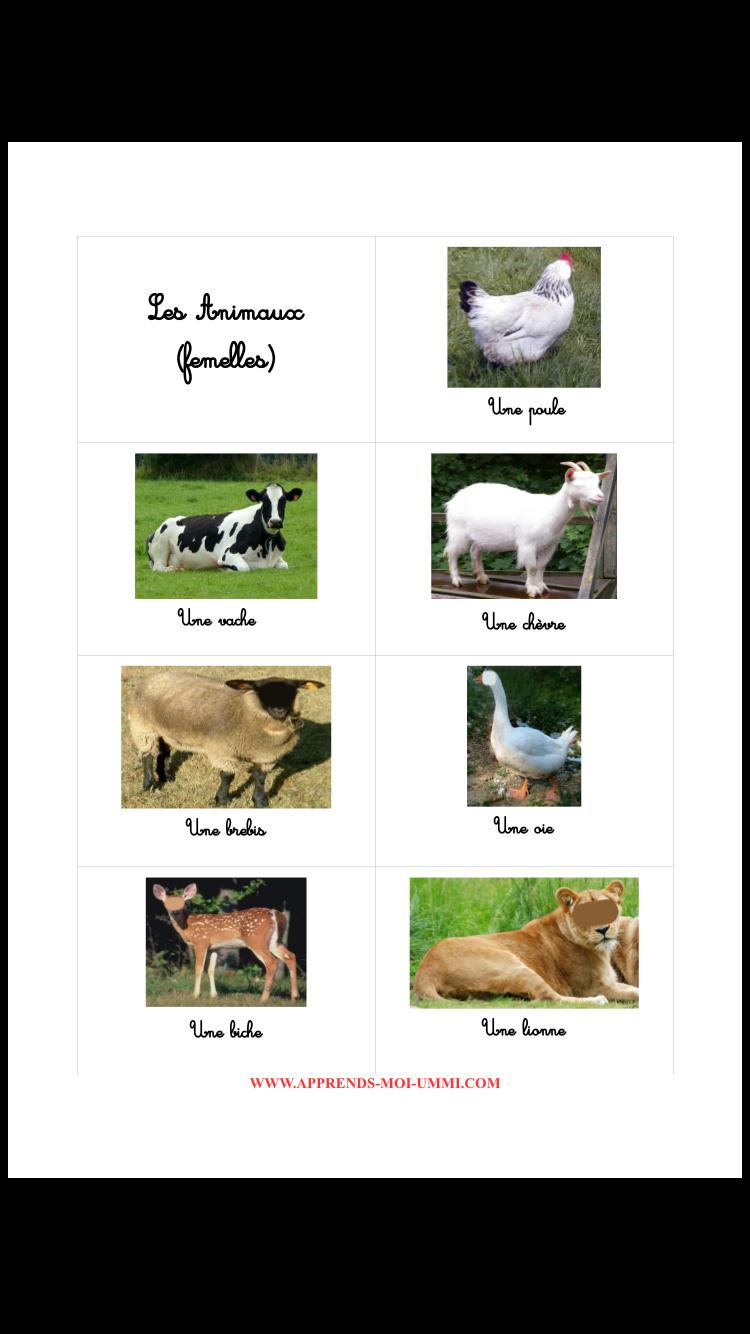 Les Animaux : Le Mâle, La Femelle, Les Petits - Apprends Moi pour Apprendre Le Nom Des Animaux