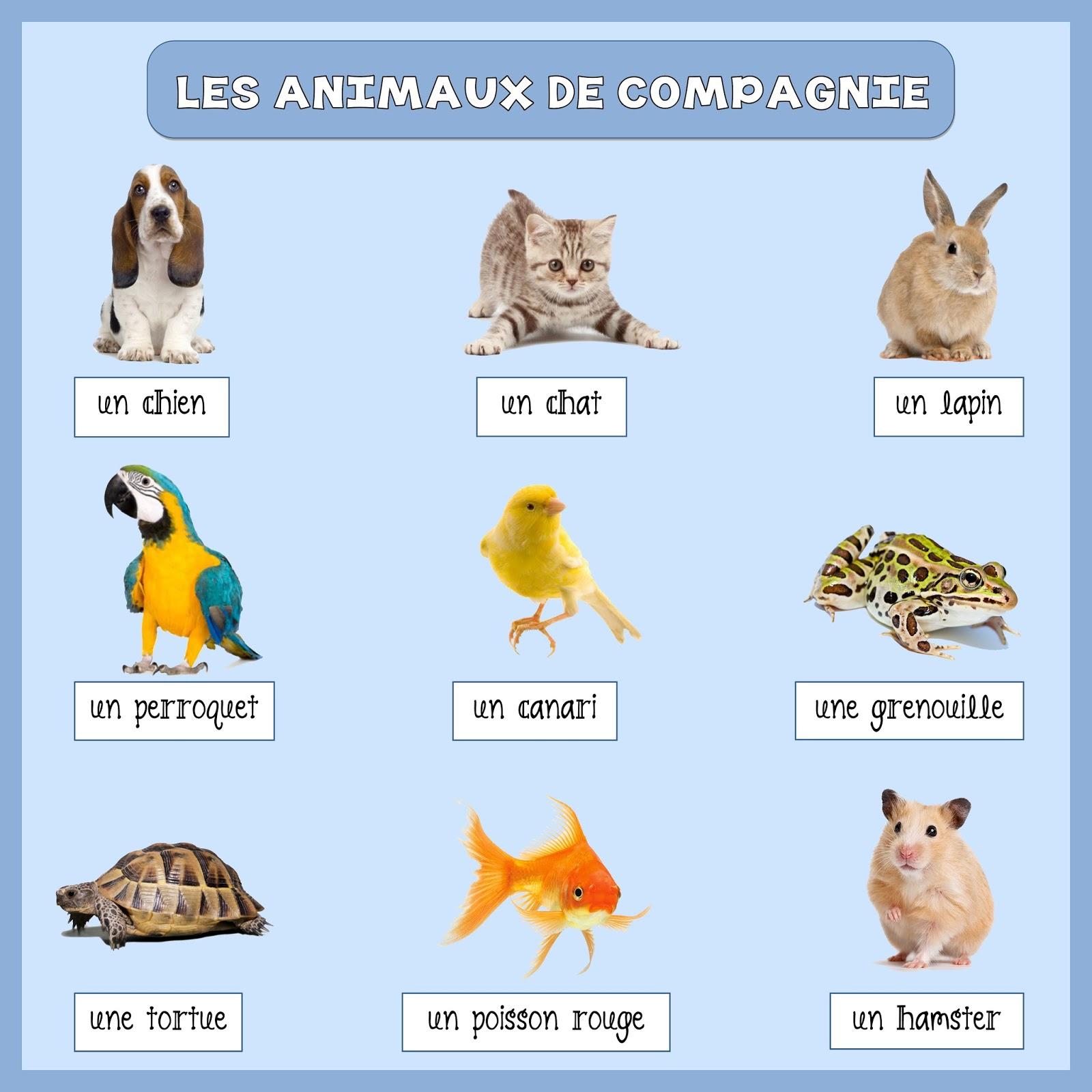 Les Animaux - Lessons - Tes Teach destiné Les Animaux Domestiques En Maternelle