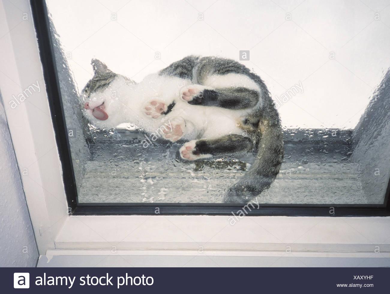 Les Lucarnes, Humide, Cat, Goutte, De Fuite, D'en Bas, D encequiconcerne Les Animaux Domestiques En Maternelle