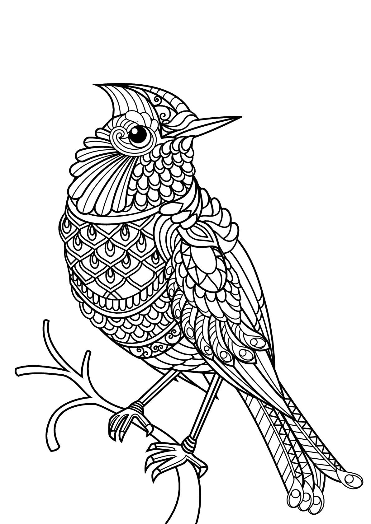 Livre Gratuit Oiseau - Oiseaux - Coloriages Difficiles Pour pour Livre De Coloriage À Imprimer