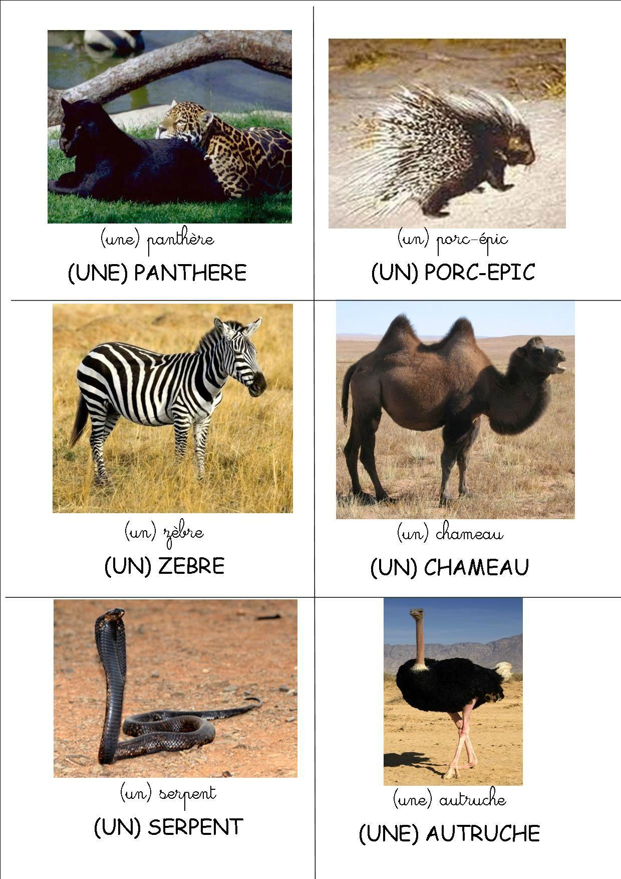 Loto : Les Animaux D'afrique (Crapouillot-Montessori) - 6 pour Les Animaux De L Afrique