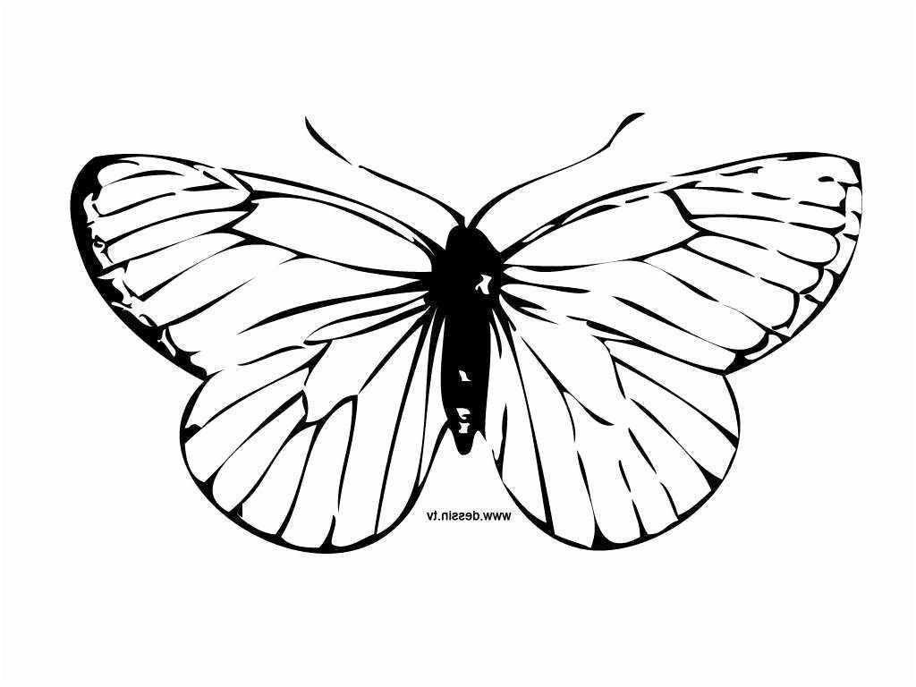 Masque Papillon A Imprimer Di 2020 encequiconcerne Masque Papillon À Imprimer