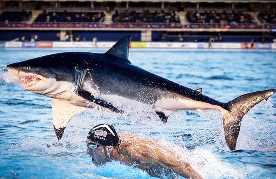 Michael Phelps Vs Shark : L'énorme Fake D'une Course Qui N'a avec Jeu De Societe Requin