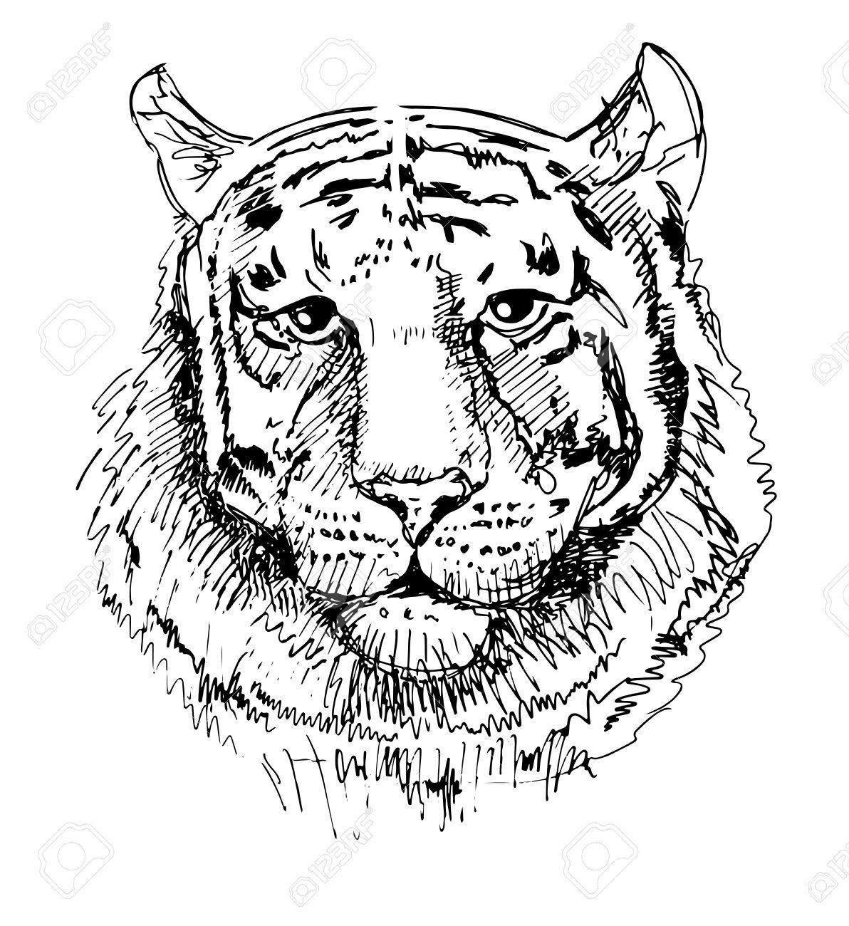 Motifs Tigre, Croquis Dessin En Noir Et Blanc, Isolé Sur Fond Blanc.  Animaux De Tête Illustration Vectorielle pour Dessin Noir Et Blanc Animaux
