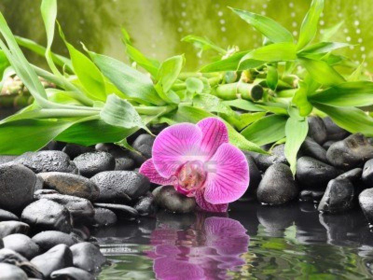 Nature Zen Attitude concernant Image Zen A Imprimer