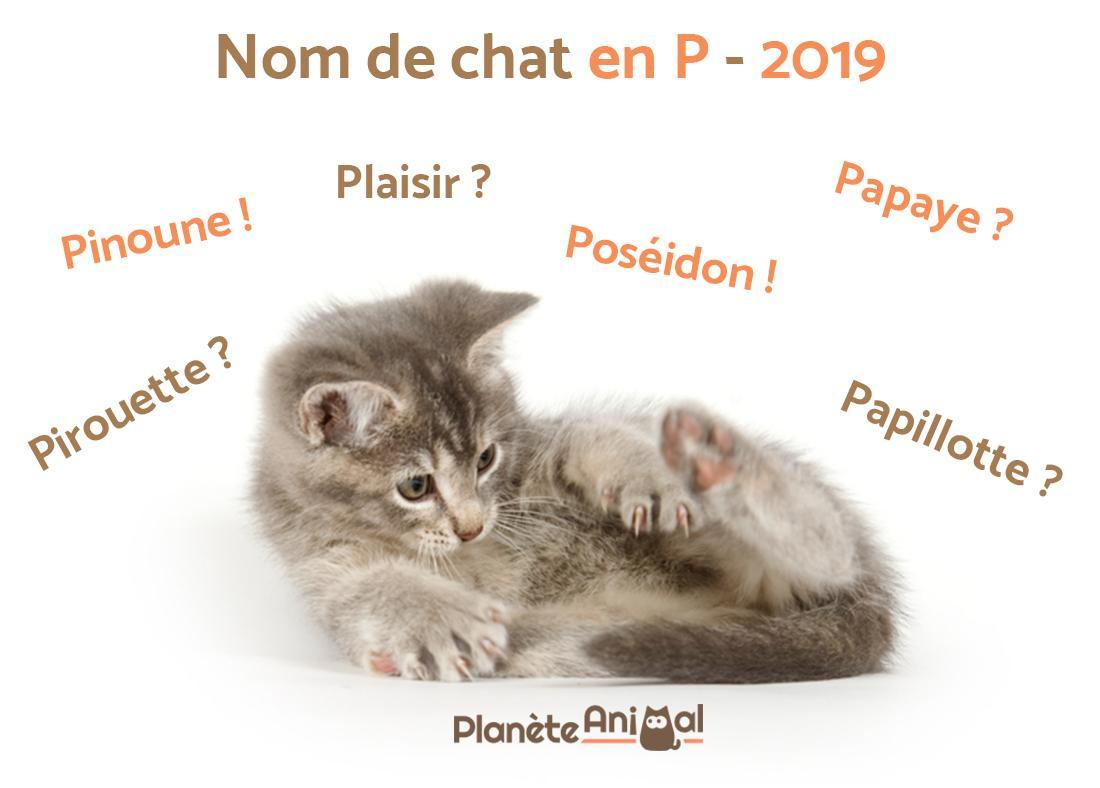 Nom De Chat En P Pour 2019 - Plus De 200 Idées De Noms ! intérieur Apprendre Le Nom Des Animaux