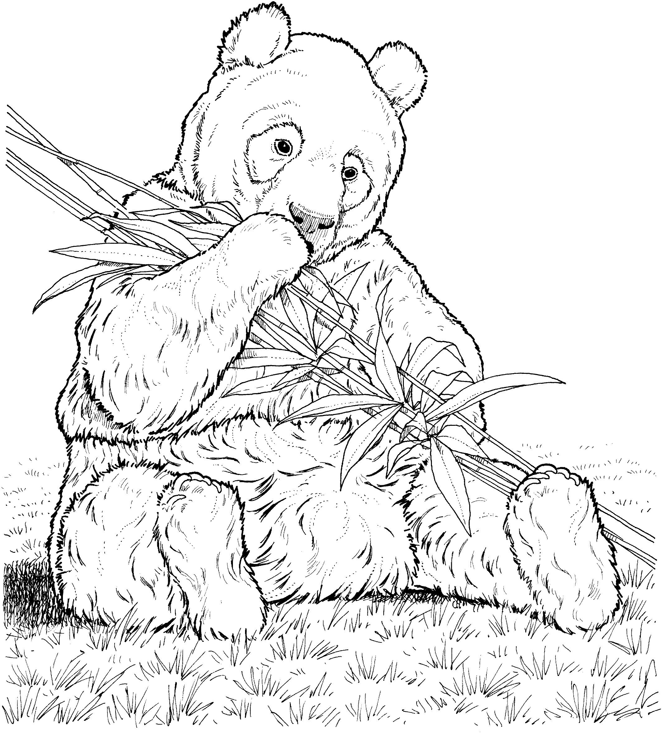 Panda #10 (Animaux) – Coloriages À Imprimer pour Panda À Colorier