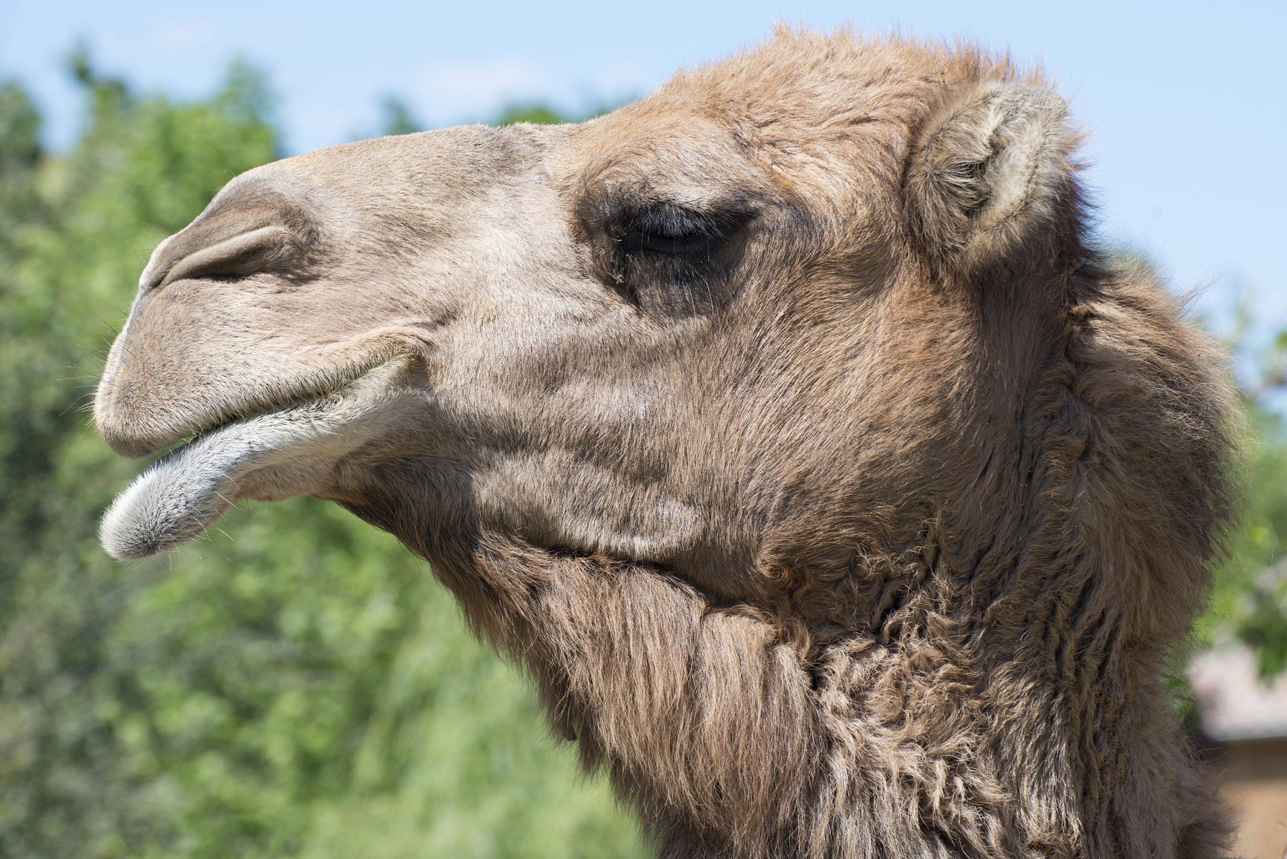 Parc Animalier De Lussas - Ardèche concernant Jeux De Ferme Gratuit Avec Des Animaux