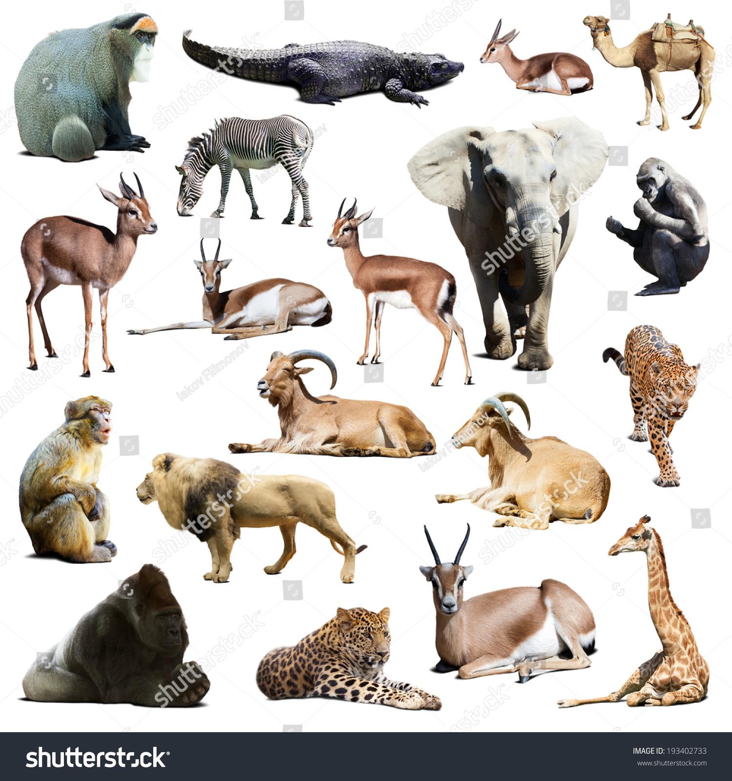 Photo De Stock De Ensemble D'animaux Africains. Isolé Sur intérieur Les Animaux De L Afrique
