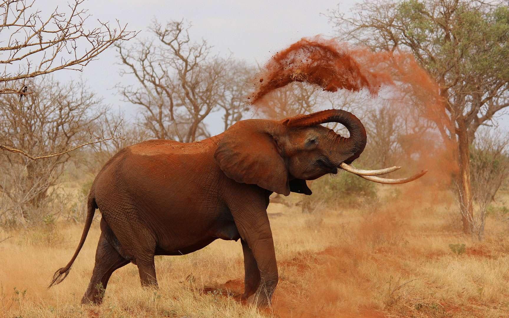 Photos | Animaux D'afrique : Partez Pour Un Safari-Photo tout Les Animaux De L Afrique