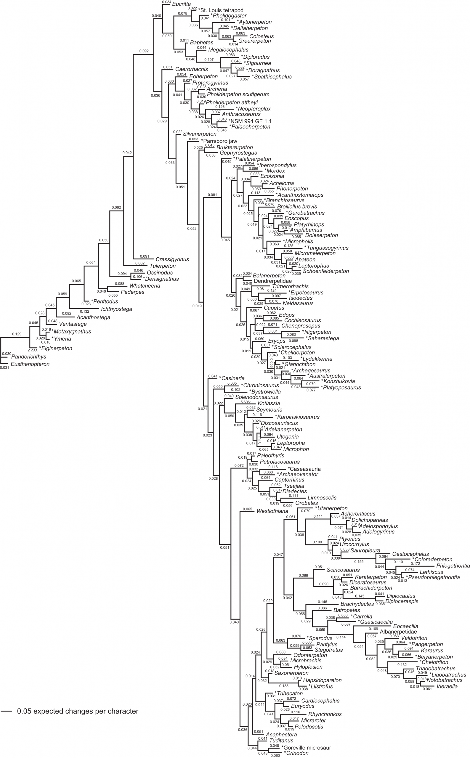 Phylogeny Of Paleozoic Limbed Vertebrates Reassessed Through pour Revision Grande Section