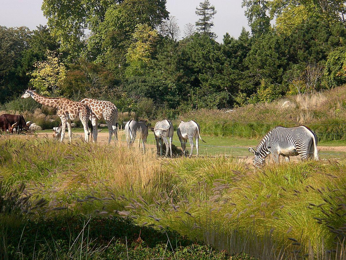 Plaine Africaine — Wikipédia tout Les Animaux De L Afrique
