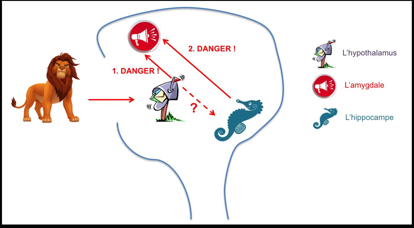 Pourquoi Le Cerveau De Votre Enfant Stressé Perd Ses Moyens tout Exercice Pour Enfant De 4 Ans