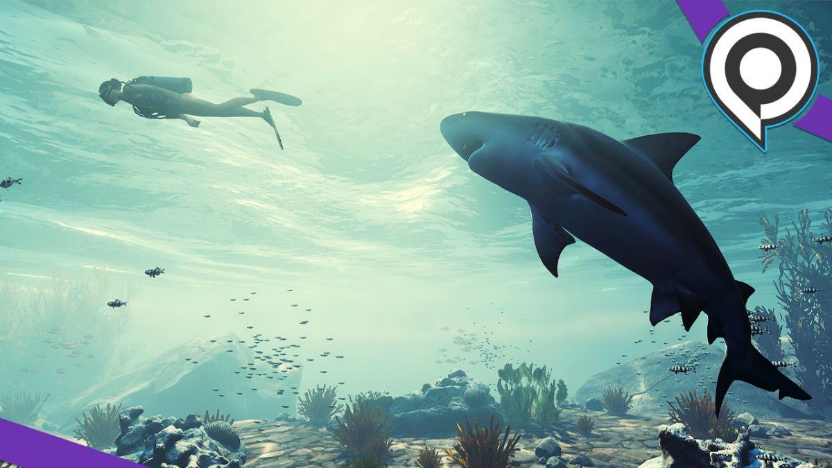 Preview Maneater, L'improbable Rpg Aux Commandes D'un Requin intérieur Requin Jeux Video