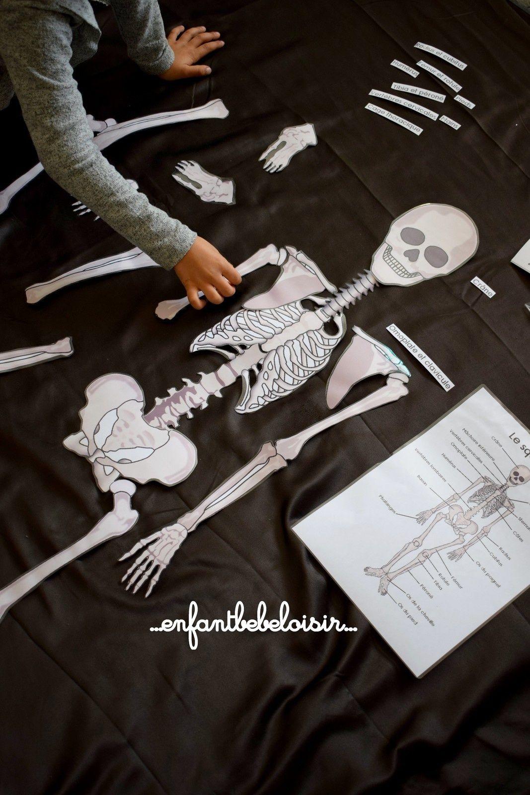 Puzzle Des Os De Squelette A Reconstituer - 1 Mètre - À tout Jeux De Squelette Gratuit