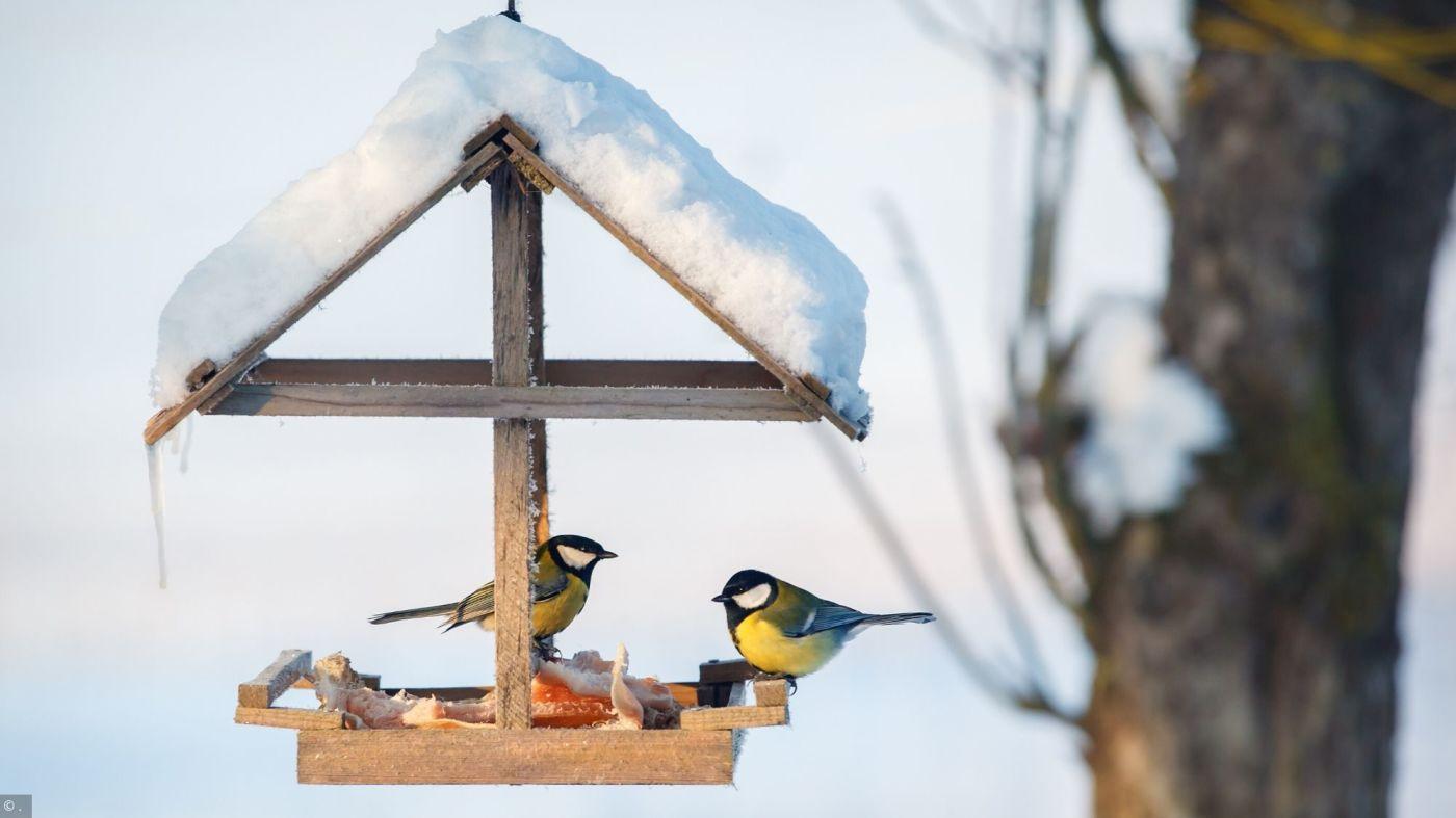 Puzzles Oiseaux En Hiver tout Jouer Aux Puzzles Gratuitement
