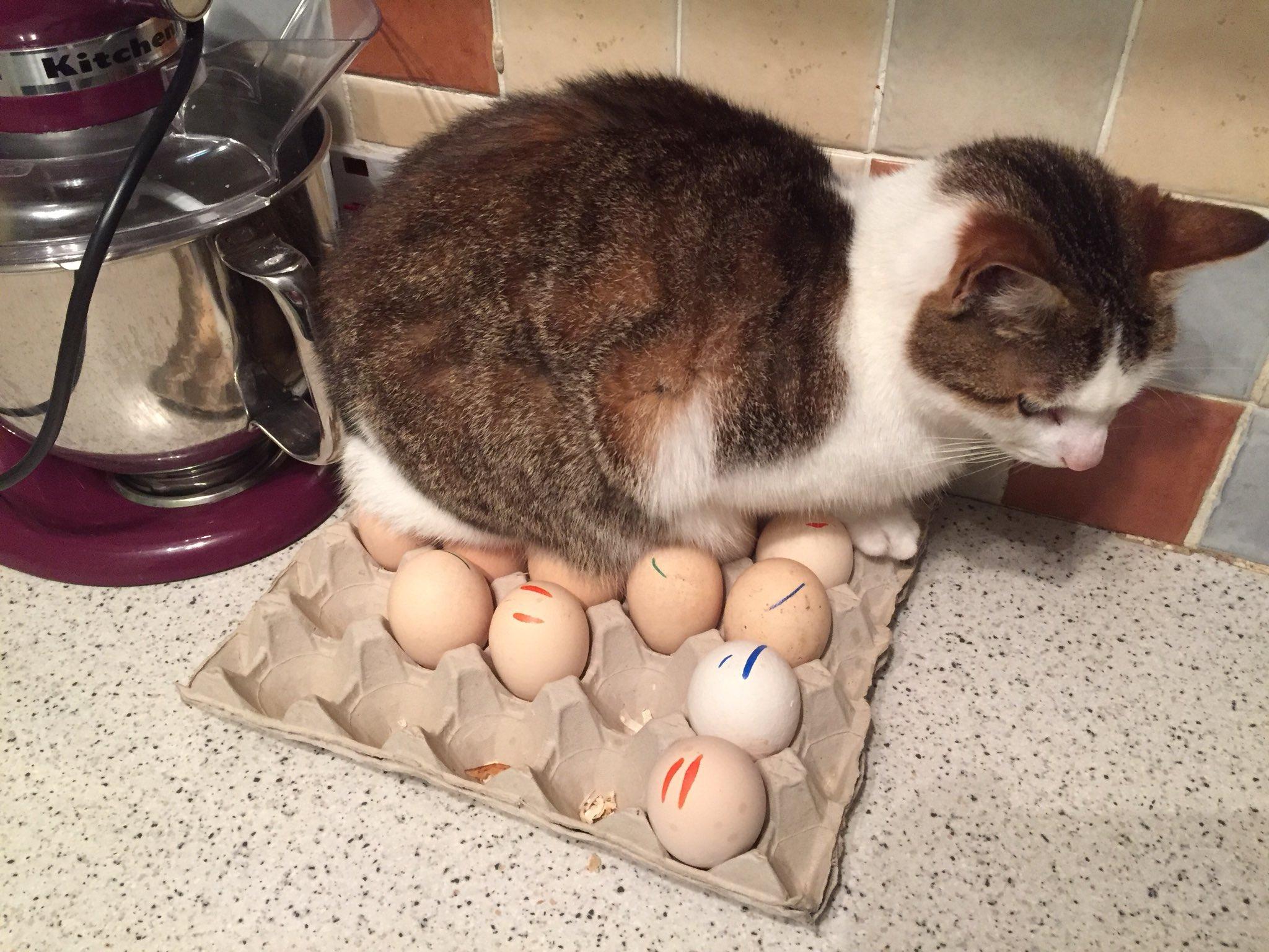 Qui, De L'œuf Ou De La Poule Est Le Premier? pour Animaux Qui Pondent Des Oeufs