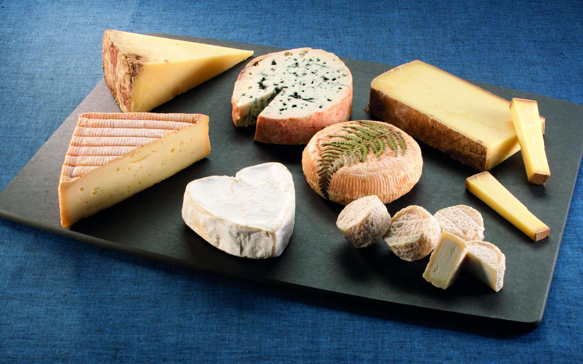 Quiz : Les Fromages De Nos Régions tout Quiz Régions De France