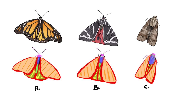 Réaliser Un Dessin De Papillon - Dessindigo serapportantà Papillon À Dessiner