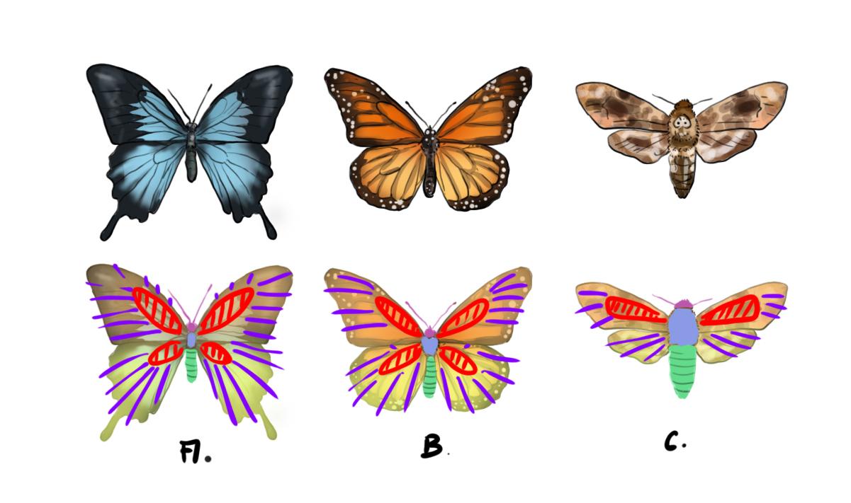 Réaliser Un Dessin De Papillon - Dessindigo tout Papillon À Dessiner