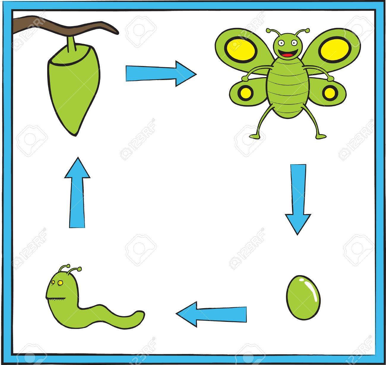 Représenter Le Cycle De Vie Du Papillon D'un Oeuf Dans Une Verte Mignonne  De Papillon pour Cycle De Vie D Une Chenille