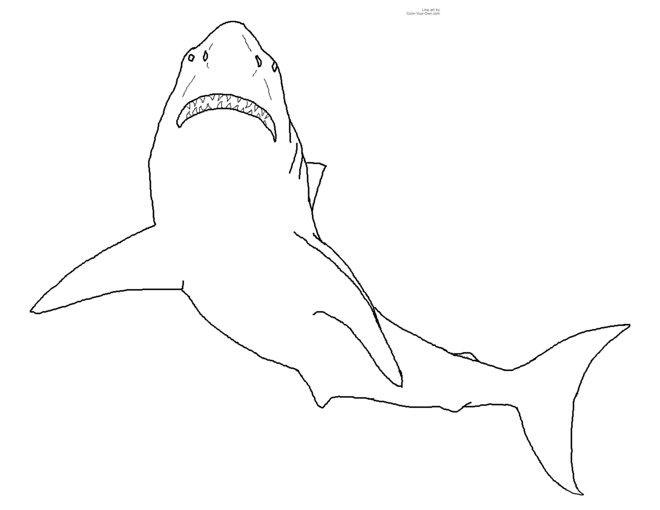 Requin #11 (Animaux) – Coloriages À Imprimer à Coloriage Requin Blanc Imprimer