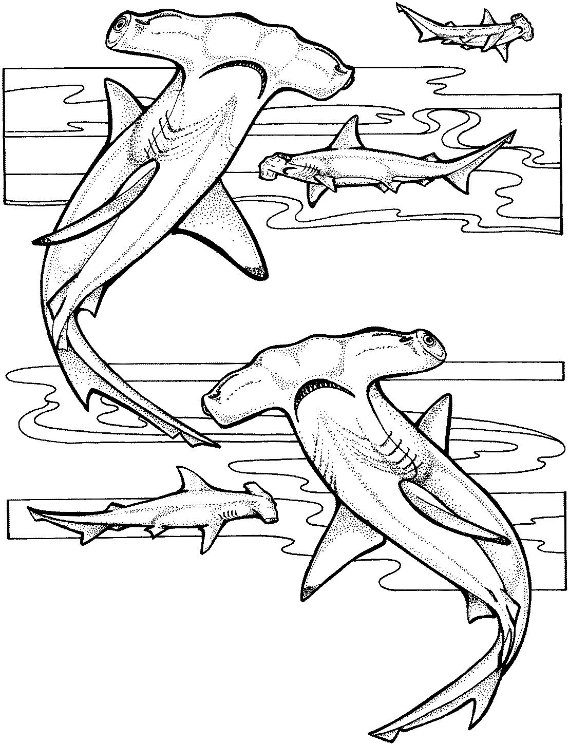 Requin #36 (Animaux) – Coloriages À Imprimer avec Coloriage Requin Blanc Imprimer