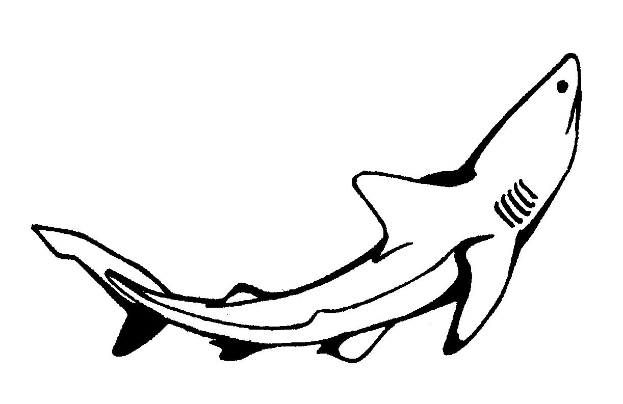 Requin #63 (Animaux) – Coloriages À Imprimer concernant Coloriage Requin Blanc Imprimer