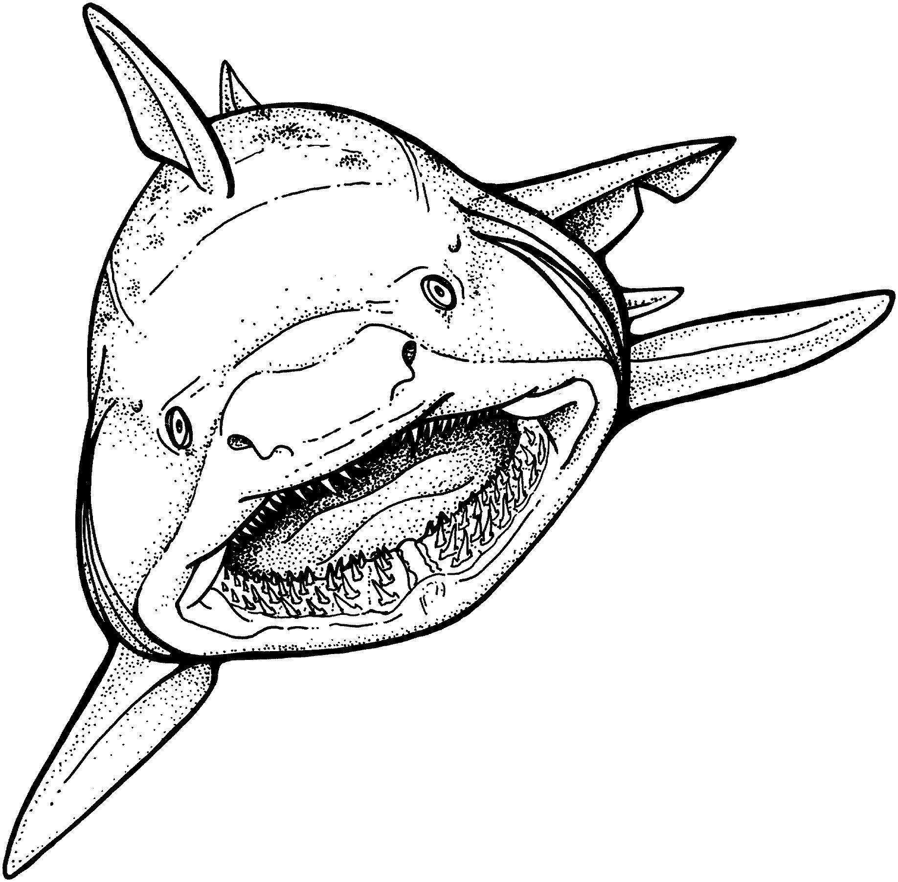 Requin (Animaux) – Coloriages À Imprimer pour Dessin De Requin À Imprimer