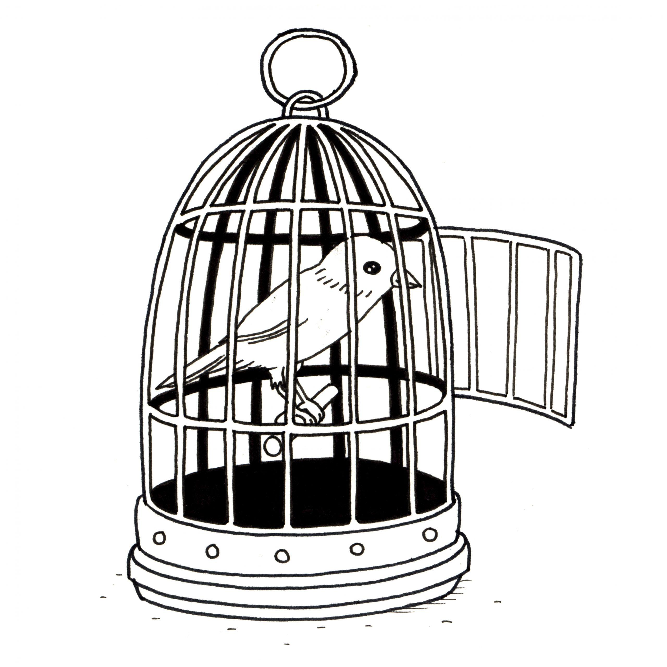 Ressources Éducatives Libres - Data.abuledu | Les à Dessin De Cage D Oiseau
