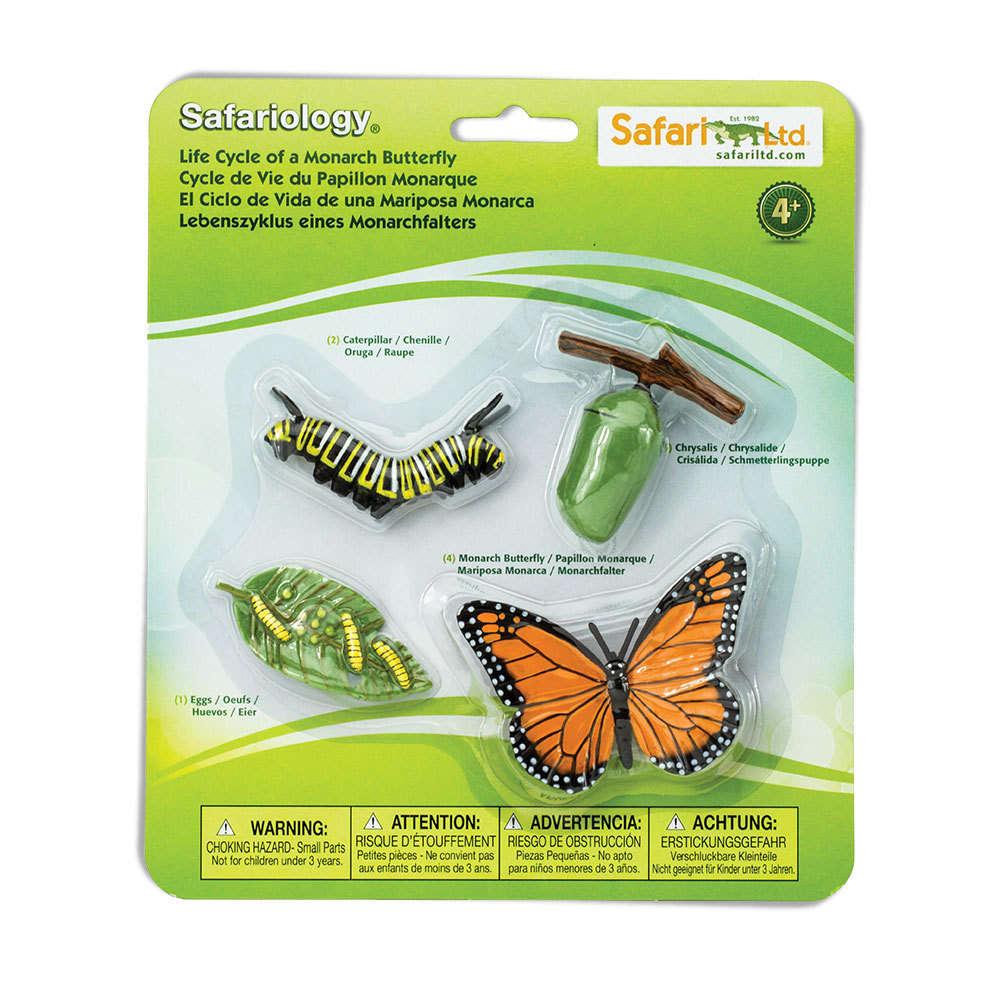 S622616 Cycle De Vie - Papillon Monarque destiné Cycle De Vie D Une Chenille