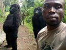 Selfie Du Ranger Et Des Gorilles : L'histoire Tourmentée De dedans Jeux De Gorille Gratuit
