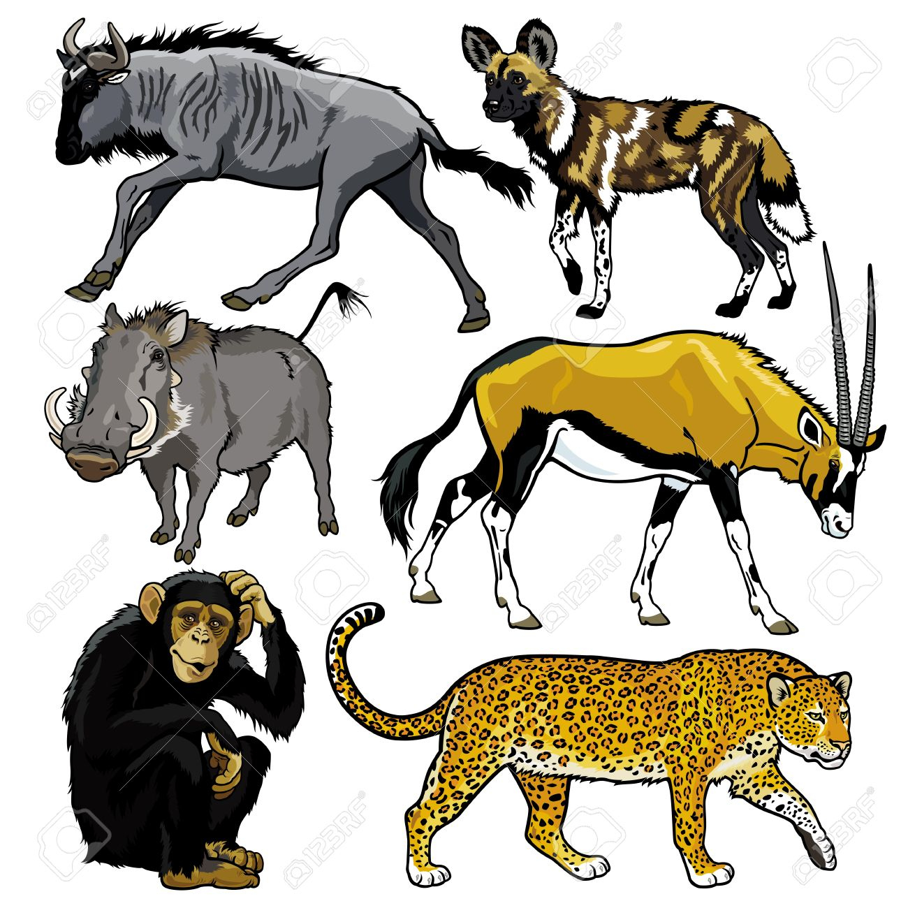 Set With Wild Animals Of Africa,pictures Isolated On White Backgound pour Les Animaux De L Afrique