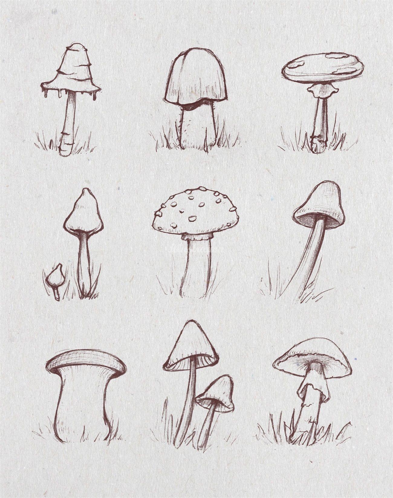 Sketch Of Growing Mushrooms . . #mushroom #growth #nature encequiconcerne Dessiner Un Champignon