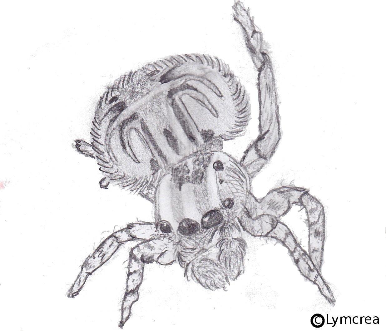 Spider - Lymcrea intérieur Dessiner Une Araignee