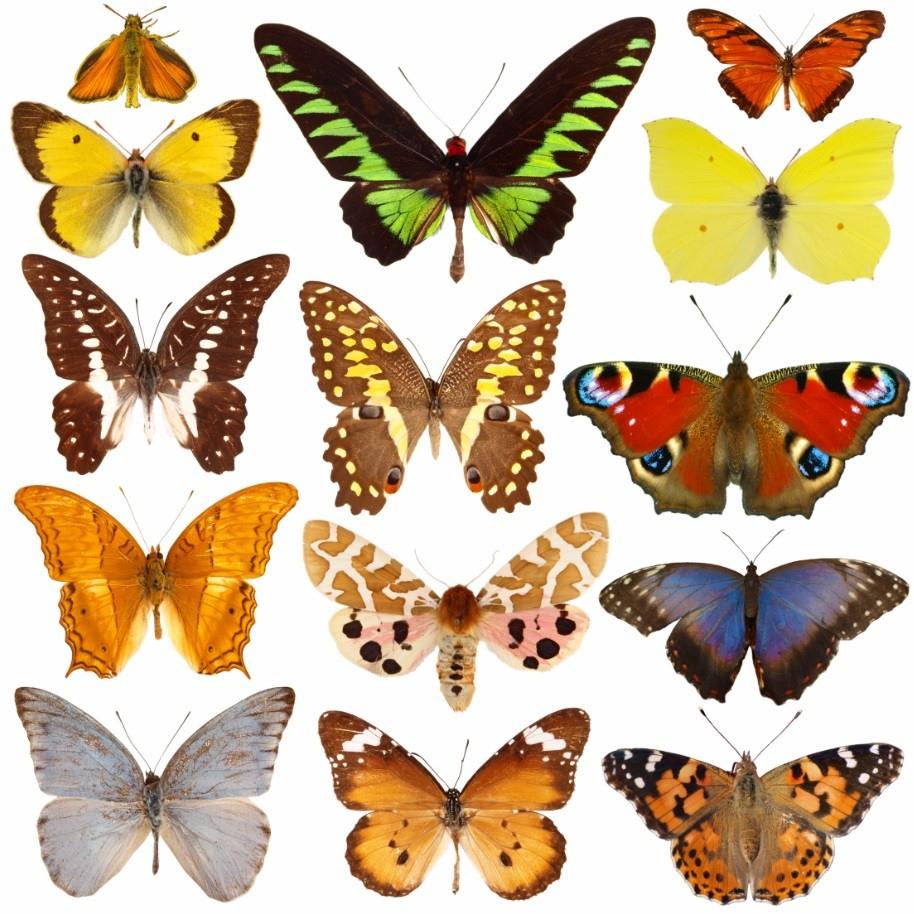 Stickers Papillon - Décoration intérieur Etiquette Papillon A Imprimer