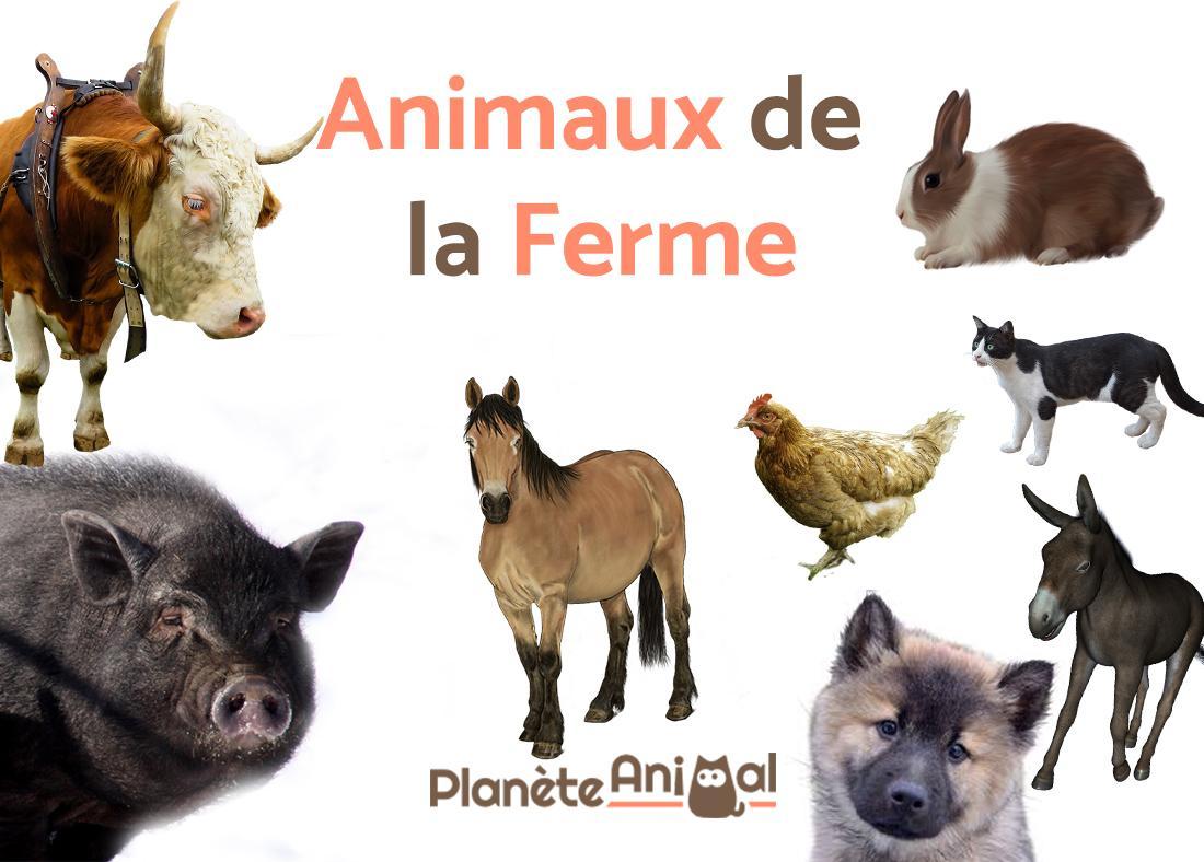 Top 13 Des Animaux De La Ferme - Avec Photos Et Vidéo ! avec Les Animaux Domestiques En Maternelle