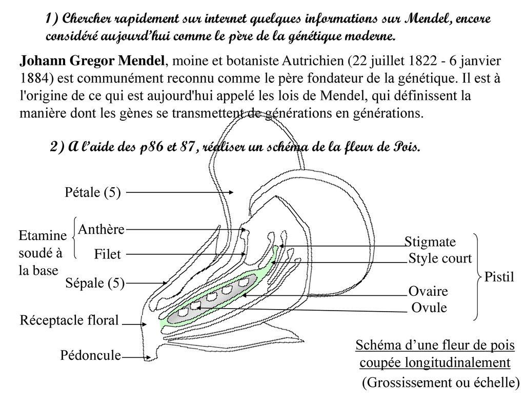 Tp2 : Dissection Florale - Ppt Télécharger encequiconcerne Schéma D Une Fleur